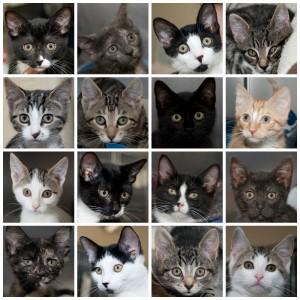 Kittens July 2014