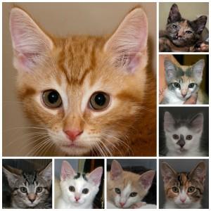 Aug kittens