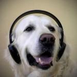 dog-music