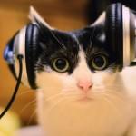 o-CAT-LISTENING-MUSIC-facebook