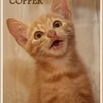 COPPER3