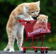 shopping cats