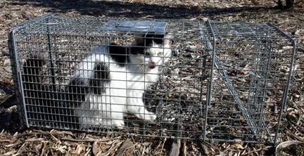 feral_cat_in_trap