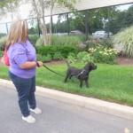 "Last Hope Pups on News 12 Long Island ""Dog Day Fridays"
